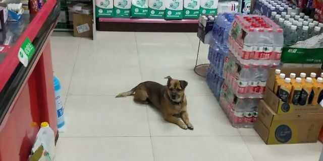 Dog Waits For 3 Months
