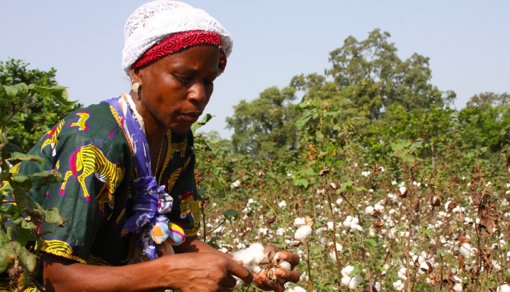 Zimbabwe Cotton Farmers Being Paid In Groceries
