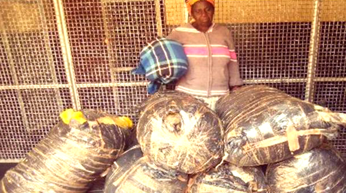 Granny busted with 228kgs of mbanje hidden at home