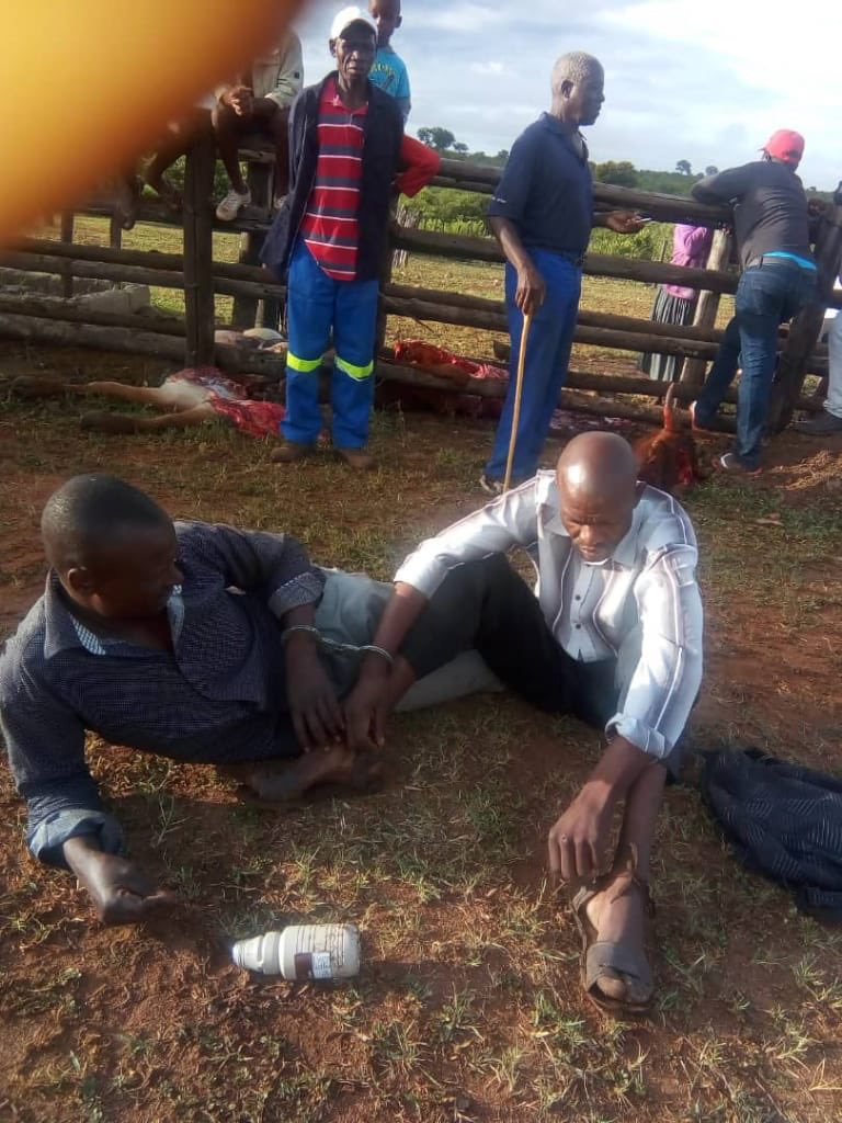 Soldiers Army Sergeants Steal Cow